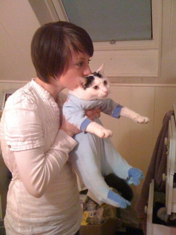 Funny cats - part 57 (30 pics + 10 gifs), funny pictures of cats, funny cat pictures, cat photos, funny photos