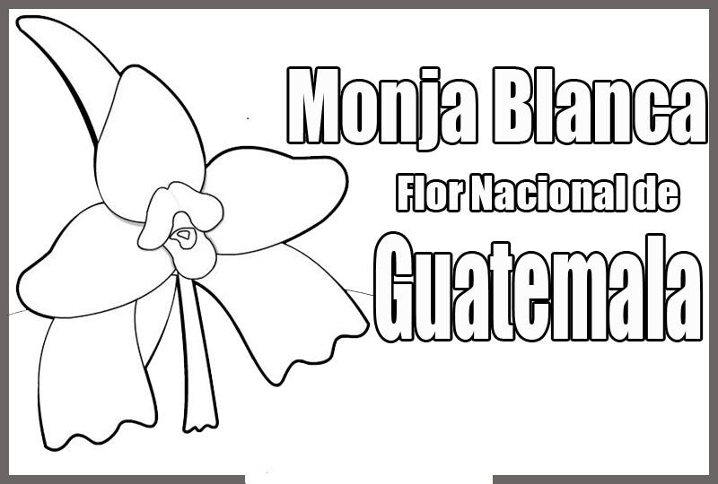 COLOREA TUS DIBUJOS: Flor Nacional