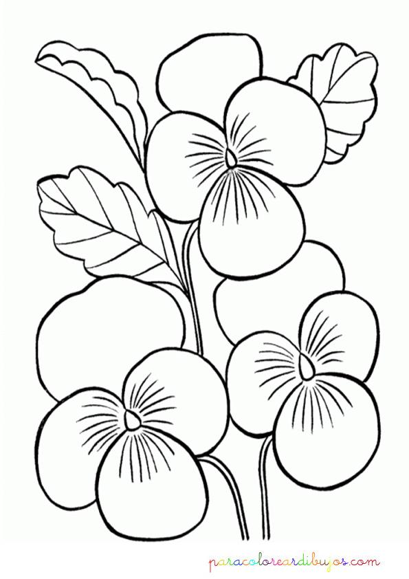 Orquideas para colorear