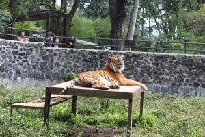 Kebun Binatang Bandung kupuk Blog
