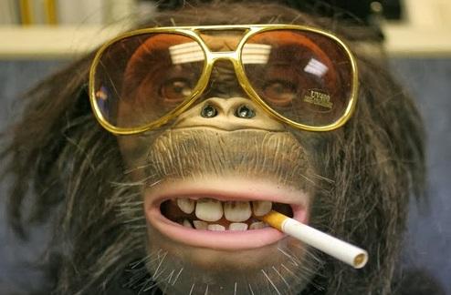 Monos con anteojos graciosos