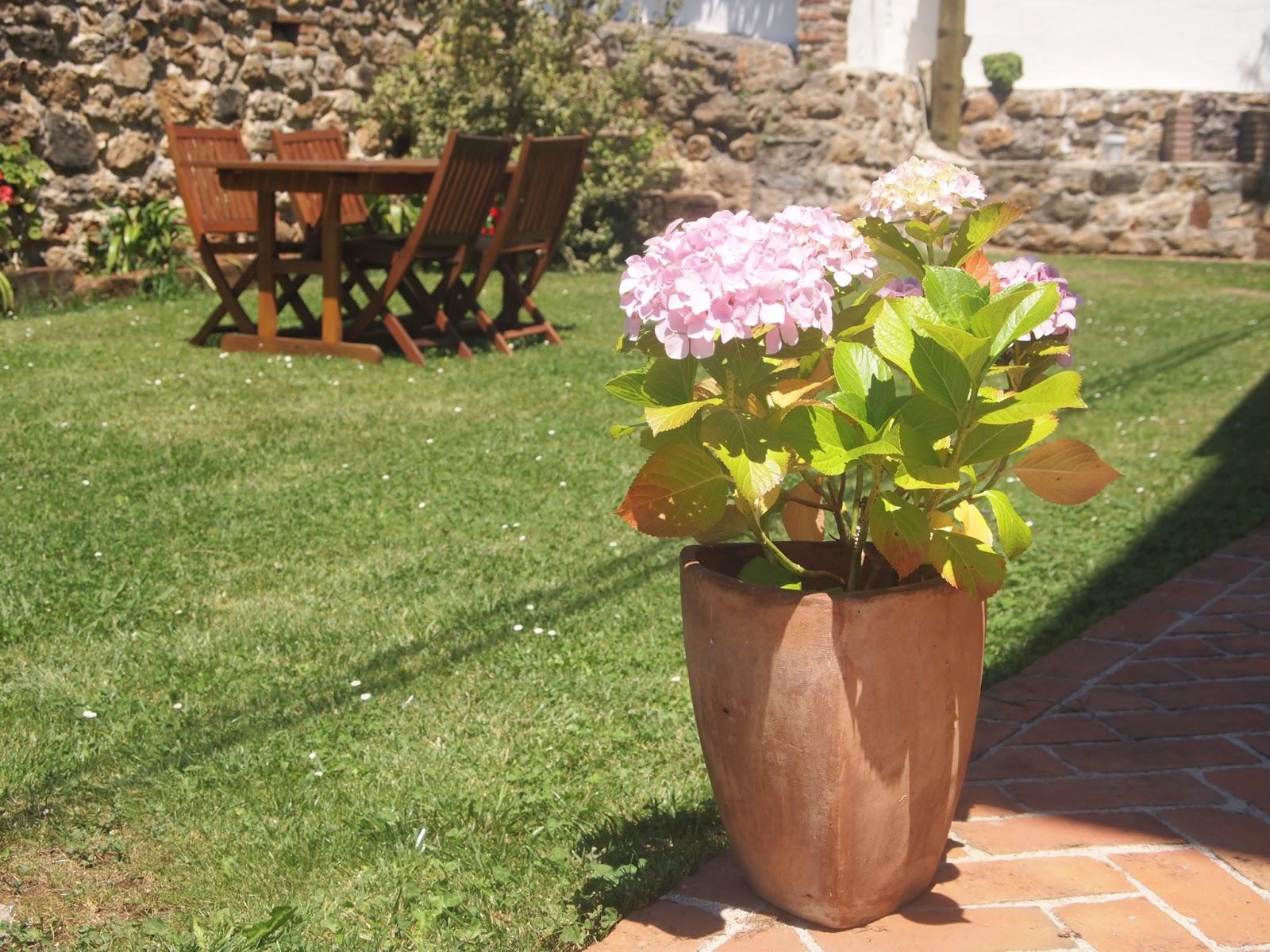 Cuidado De Hortensias En Maceta Consejos Para Cultivar Flores En