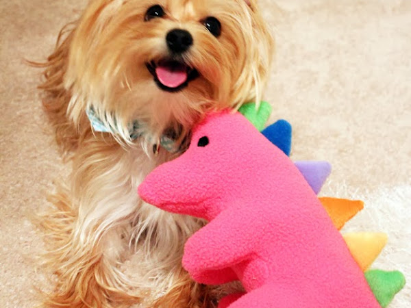 Dog Toys Benefiting Autism Research