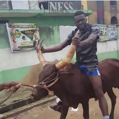 Comedian Akpororo riding his cow to Warri,Akpororo on a cow,Akpororo rides a cow,Akpororo and cow 9