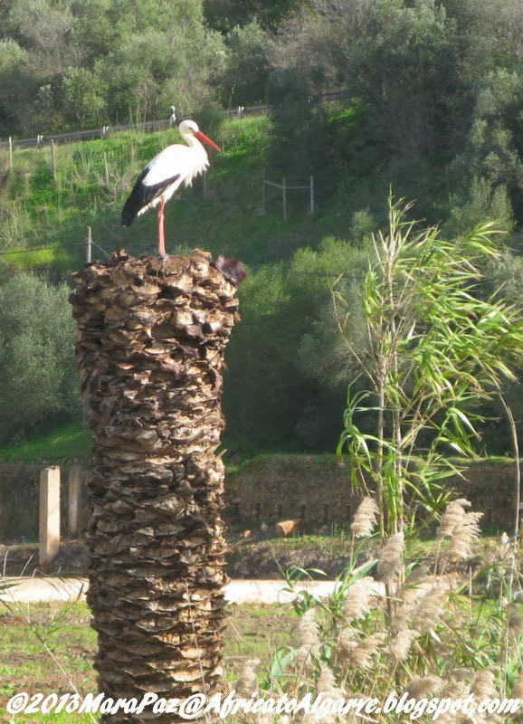 Stork on palm trunk