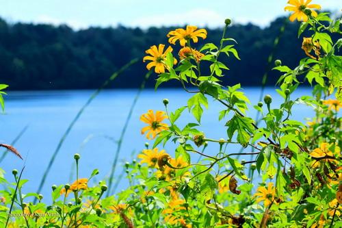 Mùa hoa dại vàng