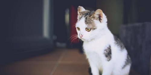 Três gatos para seguir (e amar) no Instagram