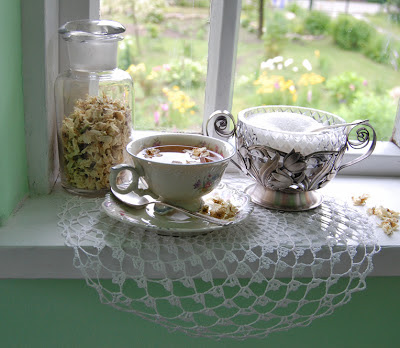 jaśmin, herbata jaśminowa, jasminum