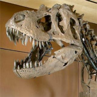 Dinosaur bones for sale prices