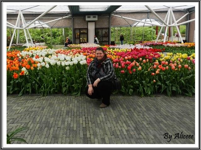 olanda-keukenhof-garden-lalele