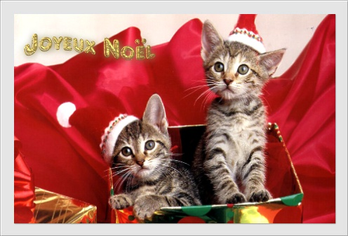 """Résultat de recherche d'images pour """"joyeux noel chat"""""""