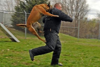 Μεθυσμένος άρχισε να δαγκώνει αστυνομικούς όταν ο σκύλος του αρνήθηκε να το κάνει