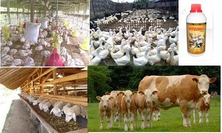 Penggunaan Viterna Untuk Ternak