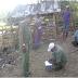 UPT Dinas Peternakan Bima Adakan Gerakan Serentak Birahi