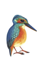 Kingfisher - Jen Haugan Animation & Illustration
