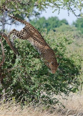 c4 images and safaris, mashatu, mashatu photo workshop