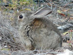 Bibliografía disponible sobre el conejo de monte