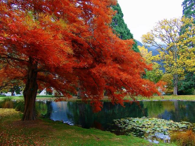 Arte y jardiner a rboles ornamentales for Arboles enanos para jardin