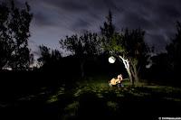 Beautiful Light in The Night