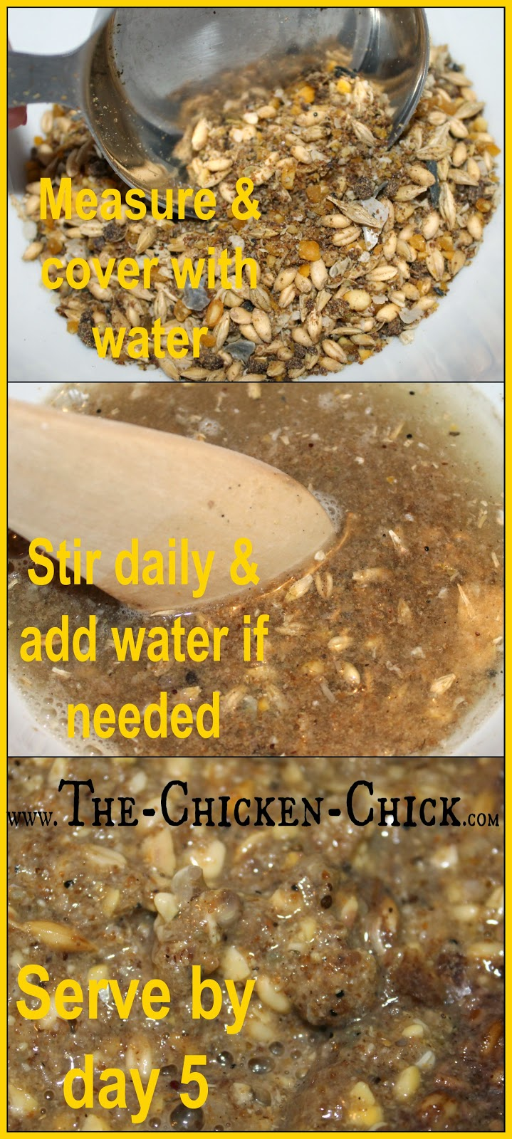 the chicken fermented chicken feed why u0026 how in 3 easy steps