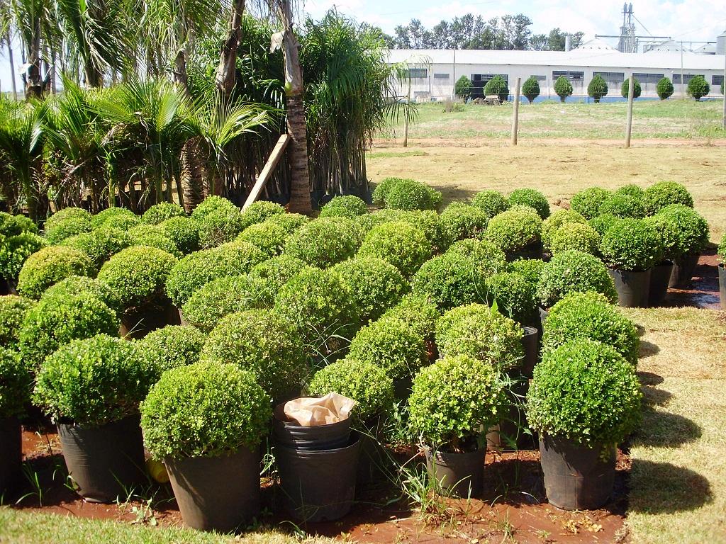 Variados tipos de plantas pictures - Tipos de plantas ...