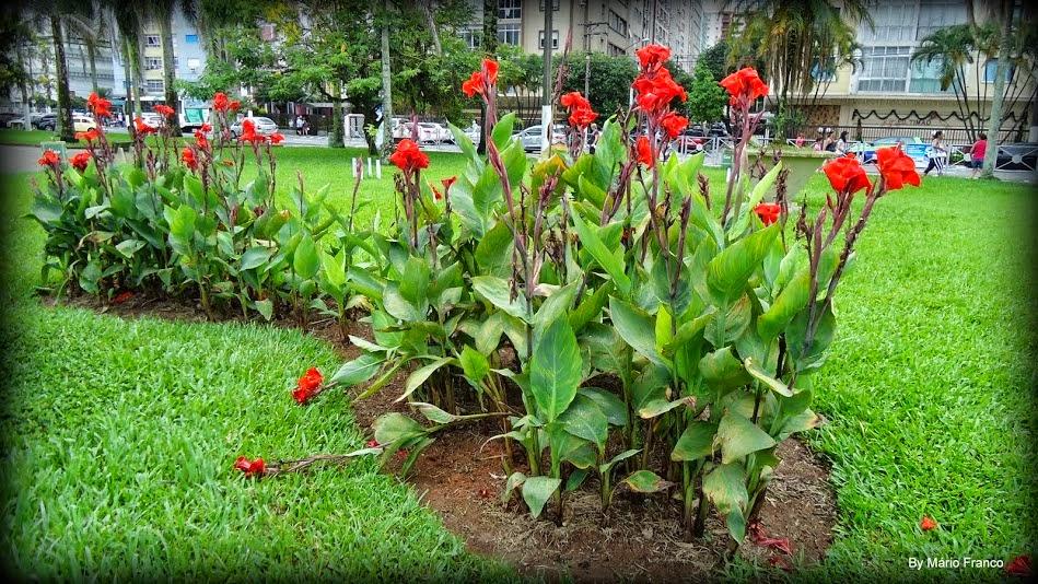 plantas bordaduras jardimBIRI, BERI, BANANEIRINHADEJARDIM