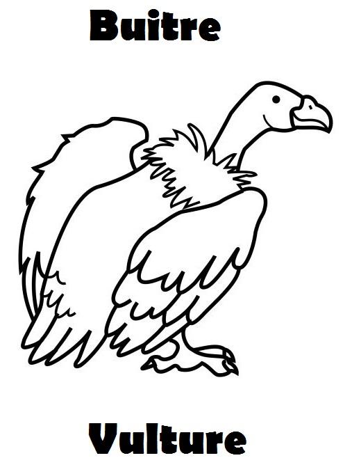 Dibujos de animales aereos para colorear - Imagui