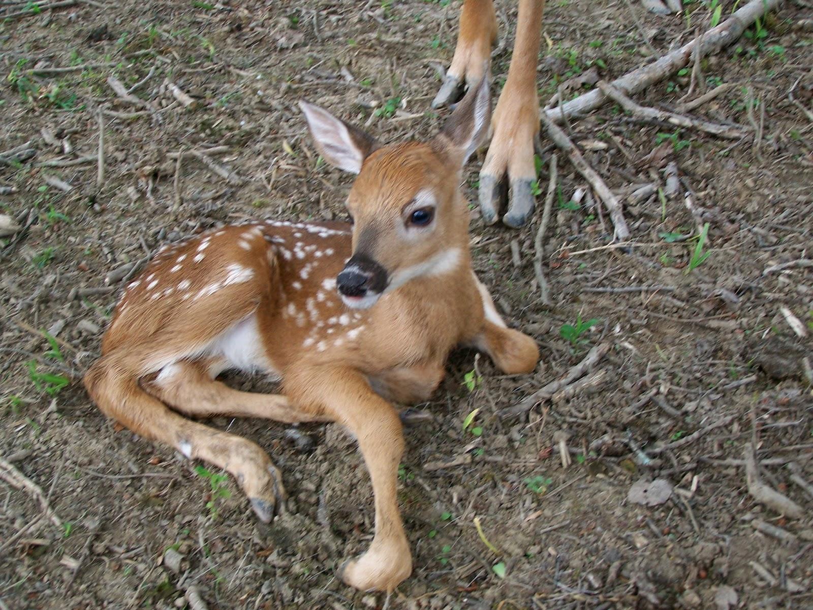 Deer Diary: 2013