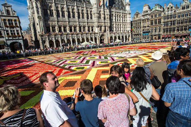 مهرجان بروكسل للزهور 2012 470552803016.jpg