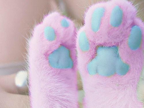 Pastel Paws!!!