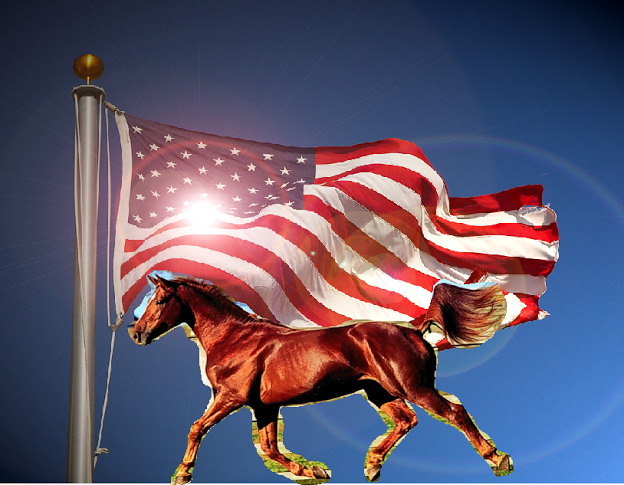 American Flag, US, USA, Red, white, blue. Horse. Brown stallion
