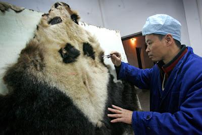 http://1.bp.blogspot.com/-Ct24n8iHAbw/TiQHRbOKNUI/AAAAAAAAD_w/ejclM1LLQkA/s400/panda+skin.jpg
