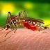 Brasil tem 340 municípios em situação de risco para dengue e chikungunya