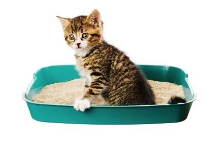 Zaicatzz Blog Kucing Cirit Birit