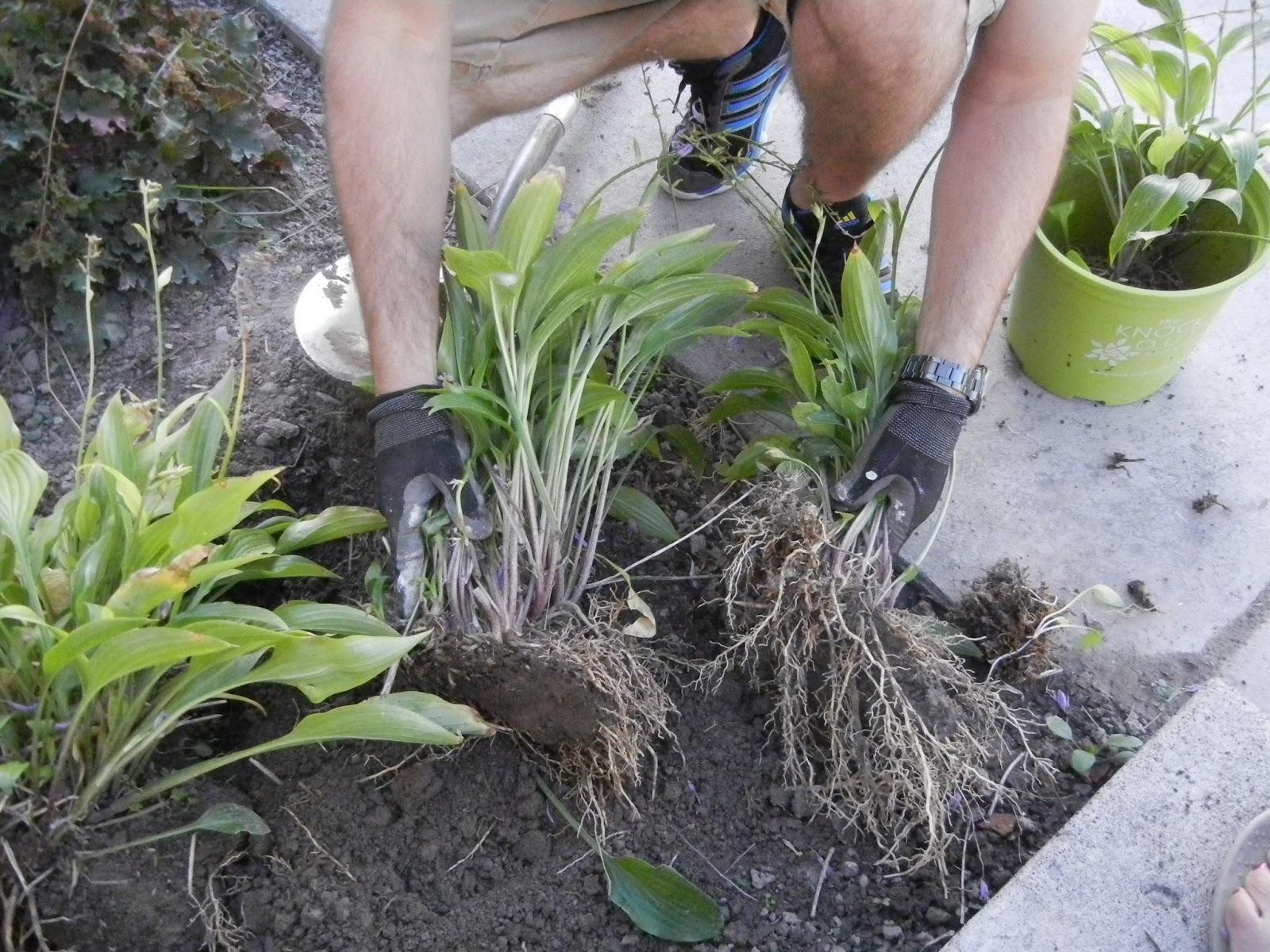 Fearless Gardening Hydrangeas 101