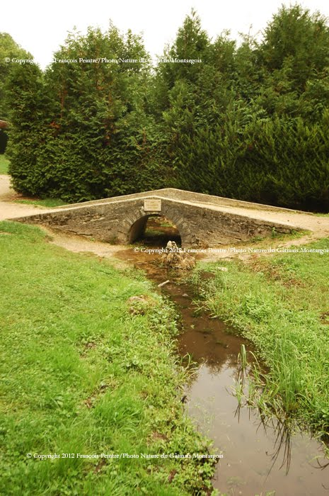 le premier pont sur la seine !