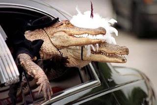 Funny Crocodile