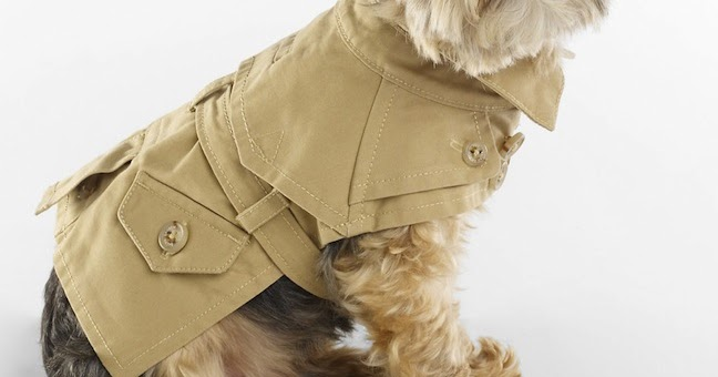 The Terrier and Lobster: Desired: Ralph Lauren Dog Trench Coat