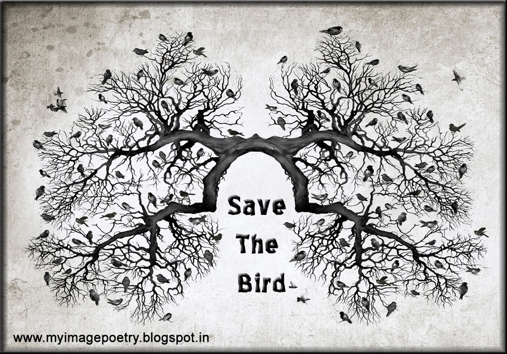 save birds The number of canadian bird species at risk increased from 47 to 86 between 2001 and 2014 habitat destruction and climate change are taking their toll, but a lot of bird deaths are associated with other human activities and their consequences save bird lives is nature canada's overall initiative to help canadians.