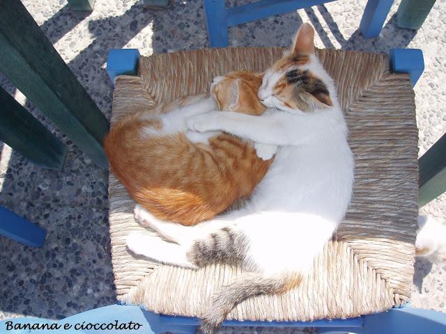 gatti greci, Kos