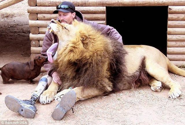La increible amistad entre un leon y un perro
