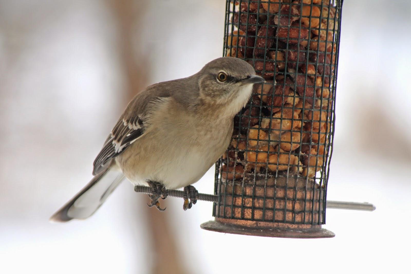 World Bird Sanctuary: How to Help Birds in Winter