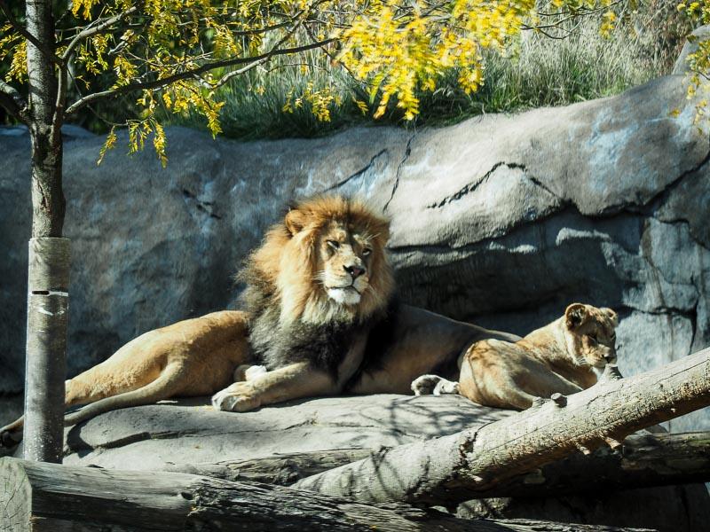 oregon zoo free day 2015