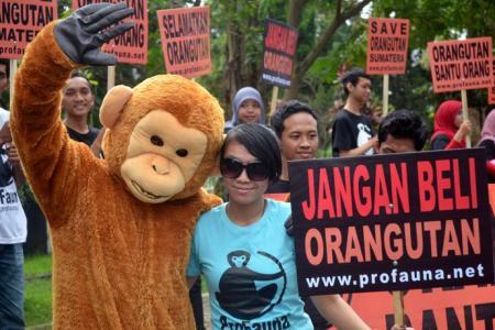 Gugah Kesadaran Warga, ProFauna Luncurkan Kampanye Ride for Orangutan