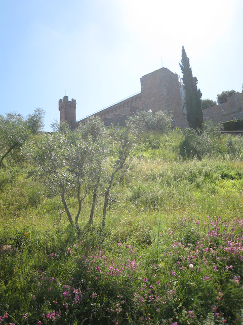 View on cypress and olive trees and Montalcino's fortress