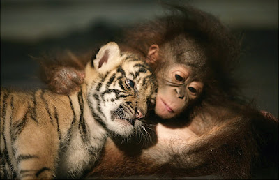 Weirdest Animal Couples pictures