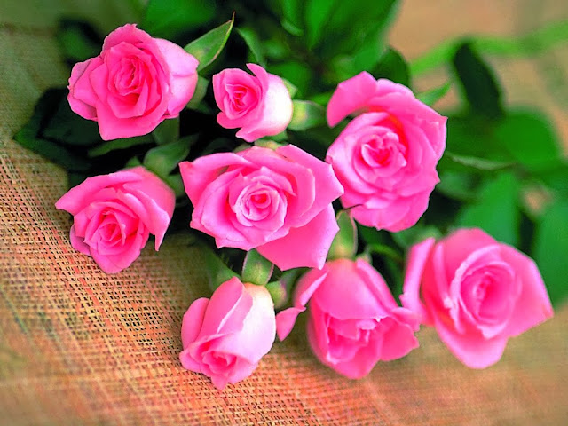 beautiful-roses-wallpapers-01