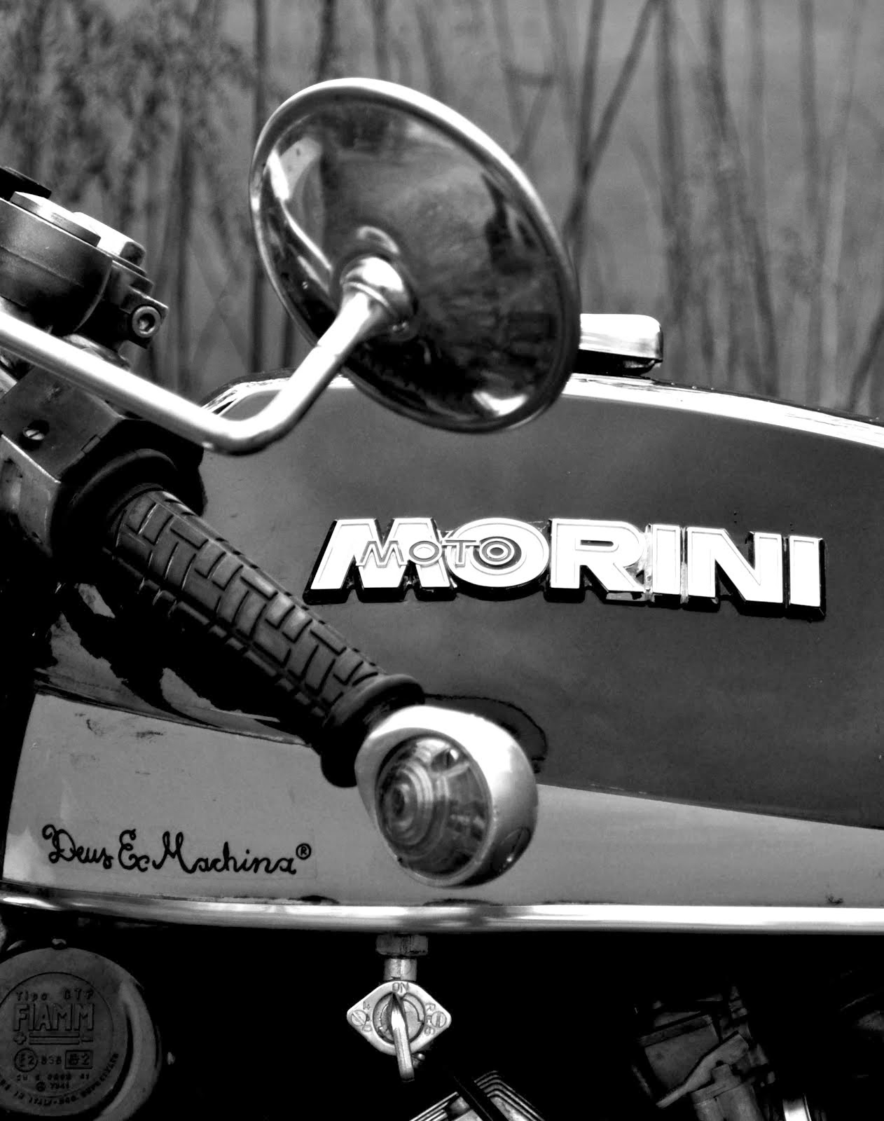 natural born caferacer