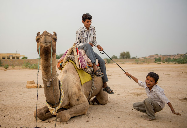 Two young boys play together with a riding crop, one on top of a camel and the other on the ground laughing in the Thar Desert, Rajasthan India