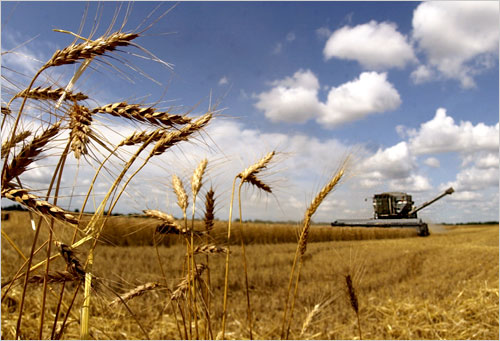 Tom Morton harvests wheat on his farm near Oxford, Kan., Friday, June 13, 2003 - Source: http://photos.state.gov/libraries/usinfo-photo/39/week_5/020107-farming-500.jpg
